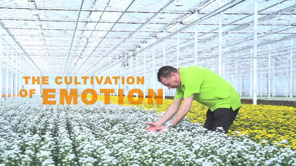 The Cultivation of Emotion video